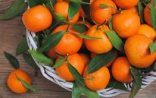 Выбор сладких мандаринов и без косточек в магазине