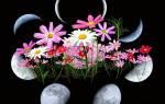 Лунный календарь для цветов на 2020 год
