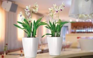 Идеальные горшки для орхидеи: как выбрать?
