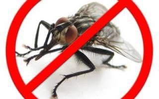 Как быстро и навсегда избавиться от мух в доме
