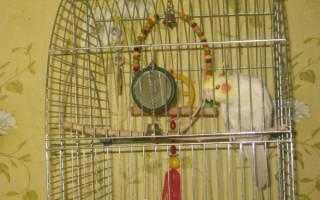 Простая игрушка для попугая своими руками за 10 минут