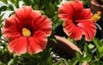Комнатные цветы с красными цветами: подробное описание и фото