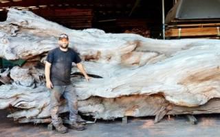 Осьминог, вырезанный из цельного куска дерева