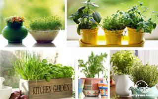 Идеи мини-огорода у себя на кухне