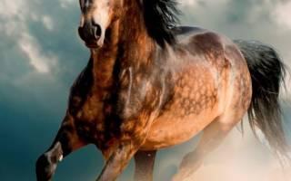 ТОП-7 самых красивых лошадей мира