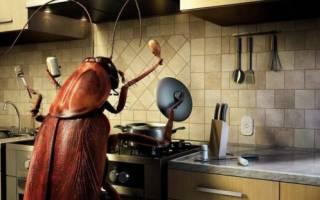 Как за 1 день избавиться от тараканов дома?