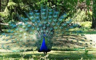 ТОП самых красивых птиц в мире