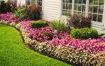100 идей: Красивые цветы на даче