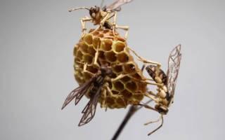 Скульптуры насекомых из бамбука от японского мастера Нориюки Саито