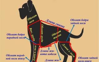 Как сделать одежду для собак своими руками?