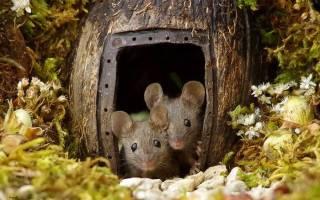 Мини-деревня для мышей
