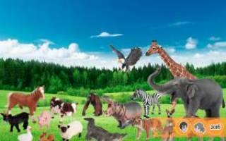 Реалистичные игрушки, которые невозможно отличить от настоящих животных